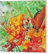 Gulf Fritillary Butterfly On Pride Of Barbados Wood Print