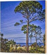Gulf Pines Wood Print