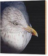 Gull #2 Wood Print