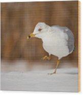 Gull Dance Wood Print