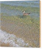 Gull Floating Wood Print