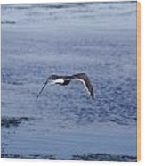 Gull Flying Over Water Wood Print