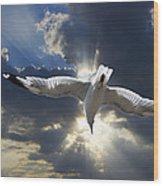 Gull Flying Under A Radiant Sunburst Wood Print