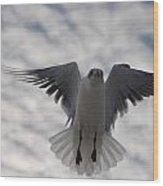 Gull From Below Wood Print