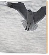 Gull From The Heavens Wood Print