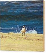 Gull Goer Wood Print