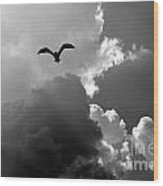 Gull In Flight Mb059bw Wood Print