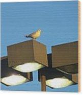 Gull On Guard Wood Print