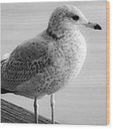 Gull On The Pier 2 Wood Print