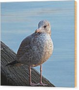 Gull On The Pier Wood Print