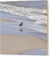 Gull On The Shore Wood Print