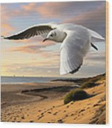 Gull On The Wing Over Beach Landscape Wood Print