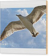 Gull - Out Of Bounds Wood Print