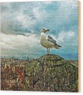 Gull Over Rome Wood Print by Jack Zulli
