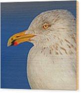 Gull Portrait Wood Print
