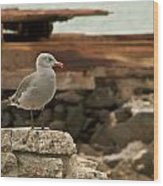 Gull Wall Wood Print by Robert Bascelli