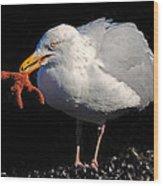Gull With Starfish Wood Print