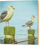 Gulls Wood Print by Denise Darby