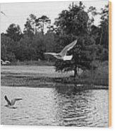 Gulls In Flight Mb083bw Wood Print