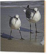 Gulls On The Beach Wood Print