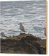Gulls Podium  Wood Print