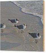Gulls Wood Print