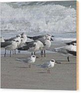 Gulls Terns Skimmers Wood Print