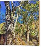 Gum Tree Ridge Wood Print