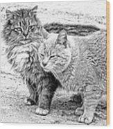 Gutter Kitties Four Wood Print