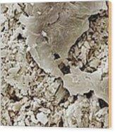 Gypsum Crystals Sem Wood Print