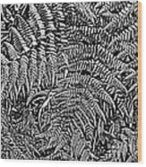 H Ferns Cont Z Wood Print