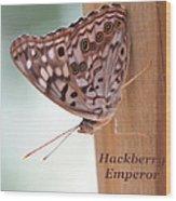 Hackberry Emperor Wood Print