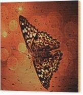 Hackberry Emperor - Asterocampa Celtis Wood Print