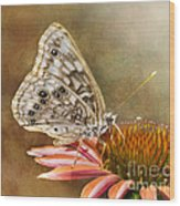 Hackberry Emperor Butterfly 2 Wood Print
