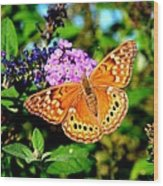 Hackberry Emperor Butterfly On Flowers Wood Print