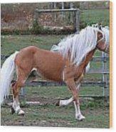 Haflinger Stallion Wood Print