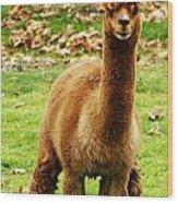 Hairy Brown Gumby Aka Brown Alpaca Wood Print