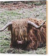 Hairy Cow Wood Print