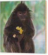 Hairy Monkey Wood Print