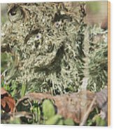 Hairy Moss Fairy Wood Print