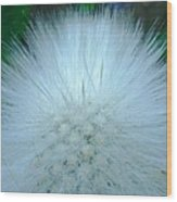 Hairy Plant Wood Print