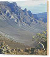 Haleakala Volcano And Chukar Maui Hawaii Wood Print