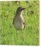 Half Beak Will Travel Wood Print