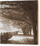 Half Moon Bay Pathway Wood Print