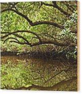 Halfway Creek At Low Tide - Everlglades Wood Print by Matt Tilghman