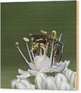 Halicid Bee Amongst The Anthers Wood Print