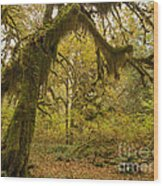 Hall Of Mosses 5 Wood Print