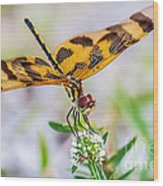 Halloween Banner Dragonfly Wood Print