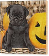 Halloween Pug Wood Print by Greg Cuddiford