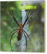 Halloween Spider Wood Print by Annette Allman